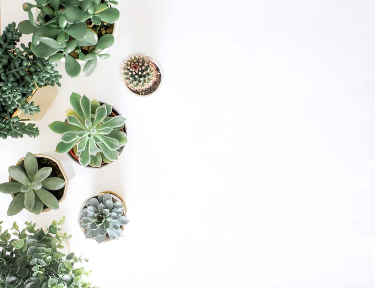 Bilder von meditativen Pflanzen